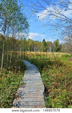 Path Through The Peatbog