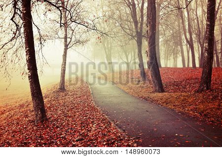 Autumn nature -misty autumn view of autumn park alley in heavy fog - foggy autumn landscape with bare autumn trees and orange fallen leaves. Autumn alley in heavy autumn fog. Vintage tones.