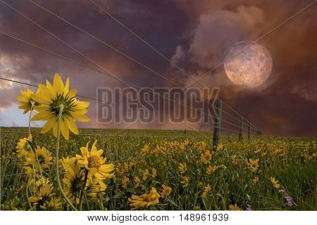 Landscape with flowers