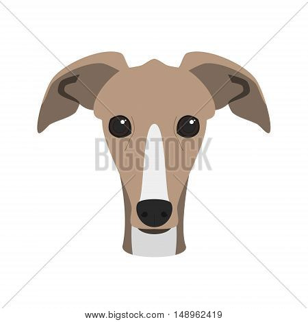 Greyhound Dog Isolated On White Background Vector Illustration
