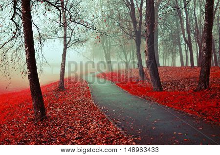 Autumn nature -misty autumn view of autumn park alley in heavy fog - foggy autumn landscape with bare autumn trees and orange fallen leaves. Autumn alley in heavy autumn fog.Park in autumn fog