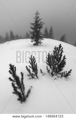Foggy landscape with twig in snow