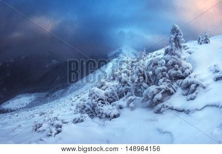 Fantastic evening landscape glowing by sunlight. Dramatic wintry scene with snowy trees. Carpathians, Ukraine, Europe. Merry Christmas!