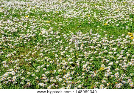Closeup of many colorful budding blossoming and overblown wild plants in Dutch grassland in springtime on a sunny day.