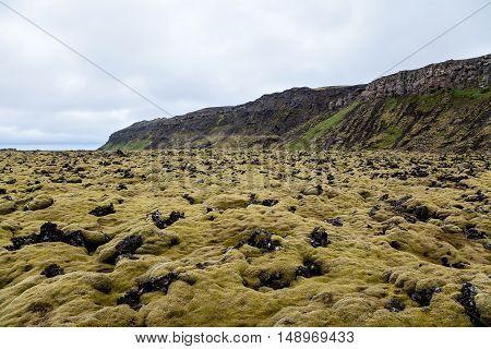 Moss Covered Lava Field in Heidmork Iceland