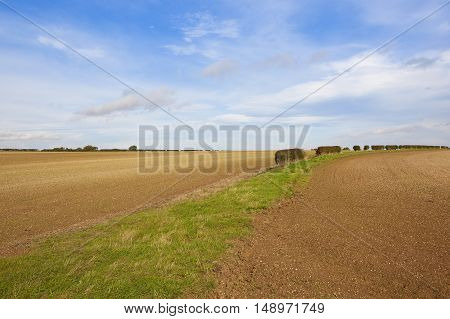 Cultivated Farmland For Crops