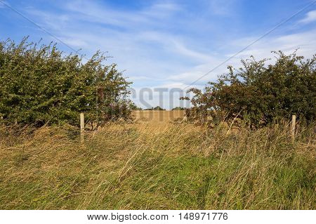 Hedgerow Gap And Scenery
