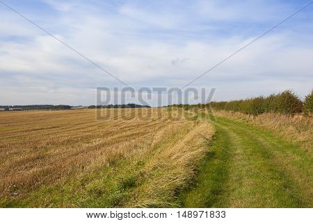 Bridleway In Late Summer