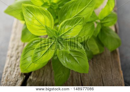Fresh green basil just harvested on a wooden board