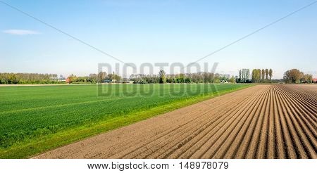 Lines of soil after seeding potatoes in the Netherlands. It is a sunny day in springtime now.