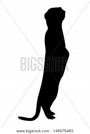 Meerkat Silhouette on White Background. Isolated vector illustration animal theme.