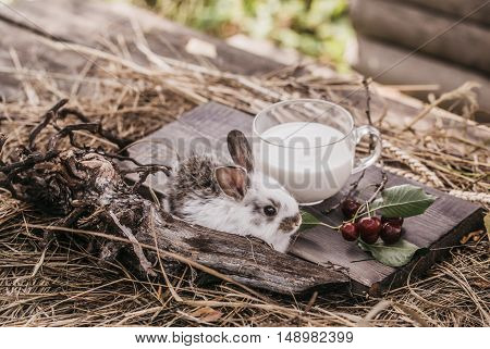 Rabbit Or Hare With Milk And Cherry On Straw