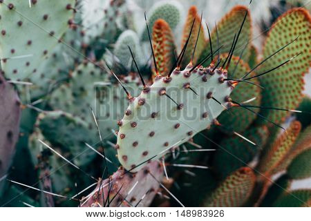 Cactus Texture Natural Background.