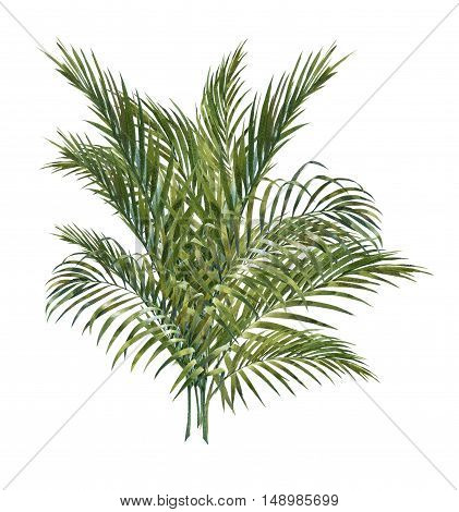 watercolor painting of coconut palm leaves isolated on white background