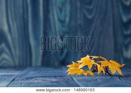 Yellow Fall leaves on blue wooden background