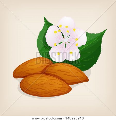 Apricot kernel with leaves and a flower. Vector illustration.