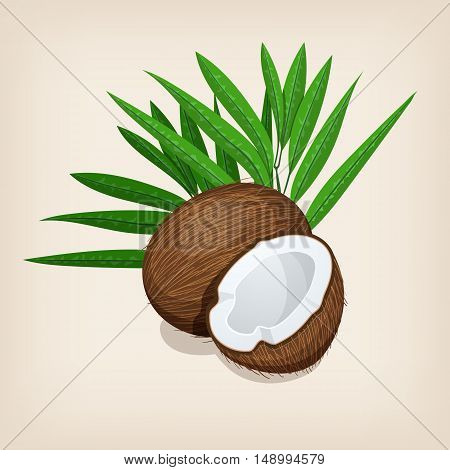 Whole and half coconut with leaves. Vector illustration.
