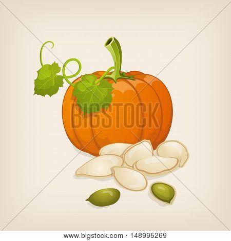 Pumpkin, leafs and pumpkin seeds. Vector illustration.