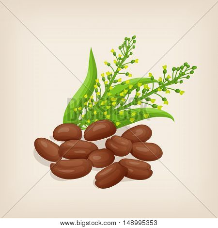 Camelina sativa seeds with flowers and leaves. Vector illustration.