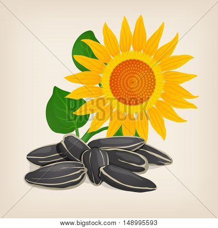 Yellow sunflowers and sunflower seeds. Vector illustration.