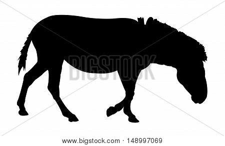 Zebra Silhouette on White Background. Isolated vector illustration animal theme.