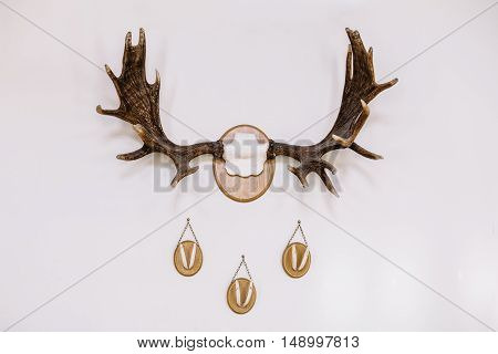 hunting trophies on the wall white background