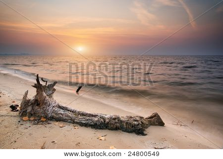 Snag on sea. Composition of nature.