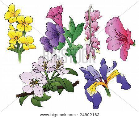Blume-Vektoren