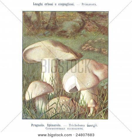 Mushroom atlas