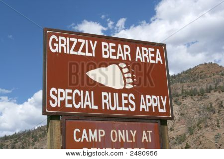 Grizzly Bear Activity 1