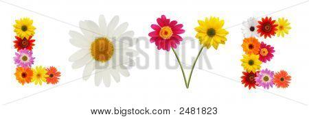 Liebe Blumen