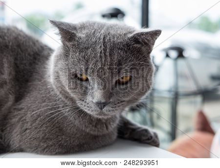 poster of Cat Relaxing On The Couch In Colorful Blur Background, Cute Funny Cat Close Up, Elaxing Cat, Cat Res