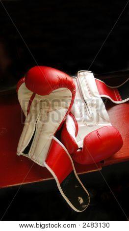 Boxing Mixed Martial Arts Gloves At Gym