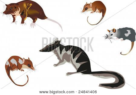 illustration with five rodents isolated on white background