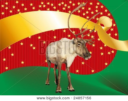 Reindeer Caribou On Funky Christmas Background