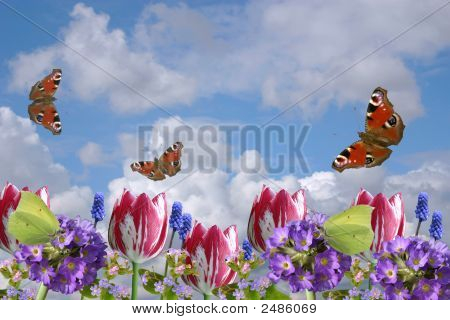 Composition From Spring Flowers And Butterflies On A Background Of The Cloudy Sky.