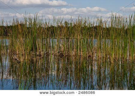Thick Bullrushes