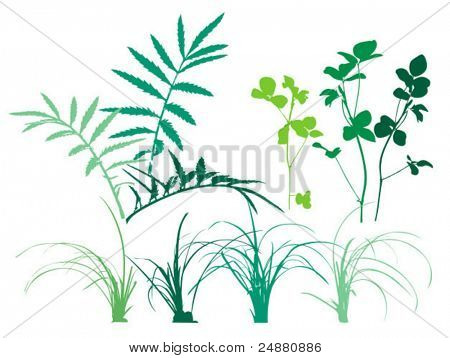 Foliage patterns - plants, grass, leaves. Vector clipart. Usable design elements