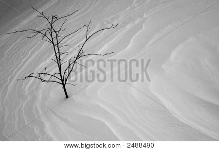 Stark Tree In Winter