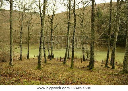 River In Jungle Of Irati. Navarra, Spain