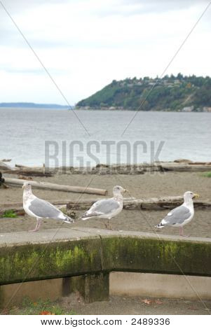 3 Gulls At The Beach