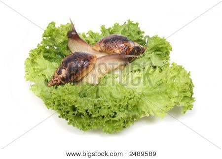 Snails On The Green