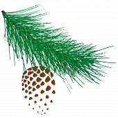 Coniferous Branch With Cones. Vector Of A Branch Of Spruce With Cones. Cones On Branches. poster