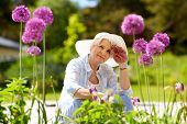 gardening and people concept - tired senior woman or gardener with flowers working at summer garden poster
