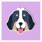 Doggie Face Of Bernese Mountain Dog Cartoon Drawing On Purple Background. Heavy Swiss Highland And S poster