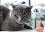 Cat Relaxing On The Couch In Colorful Blur Background, Cute Funny Cat Close Up, Elaxing Cat, Cat Res poster