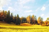 Autumn Landscape - Dense Forest Trees In The Valley In Sunny Autumn Weather. Colorful Autumn Trees I poster