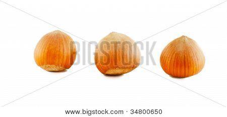 Three Hazelnuts In Shell