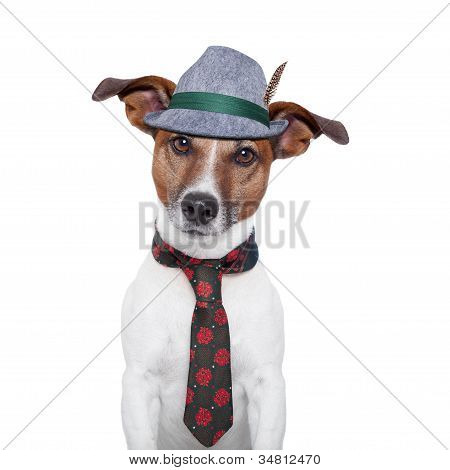 Dog Oktoberfest