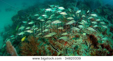 Schooling fish over a reef
